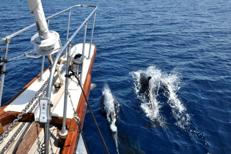 navigare con i delfini