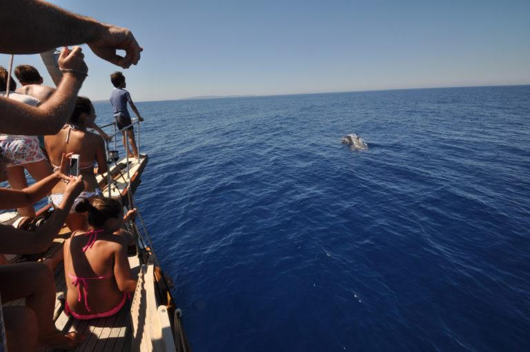 avvistamento delfini durante una gita in barca a vela a Sant'Antioco