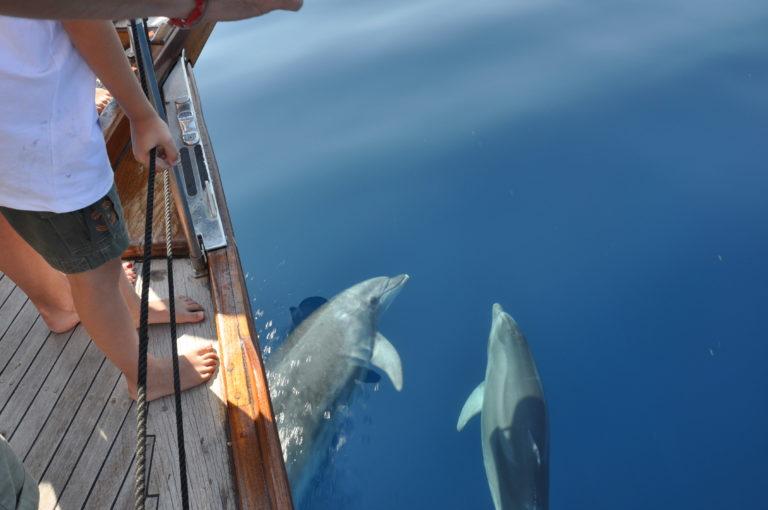 gita in barca a vela a Sant'Antioco con delfini